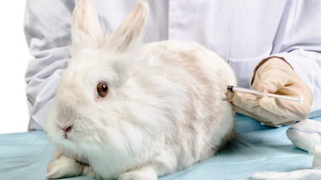 Вакцина для кроликов от миксоматоза и вгбк инструкция