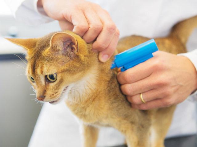 Комплексная прививка кошкам