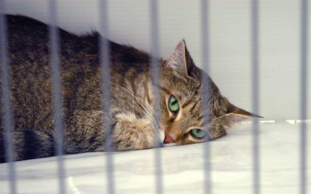 Кошка на карантине
