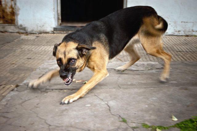 Прививка от укуса собаки что делать нельзя