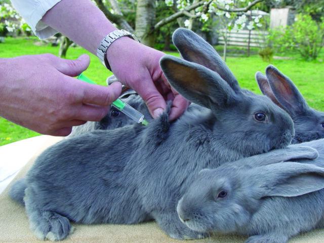 Вакцина для кроликов ассоциированная вакцина