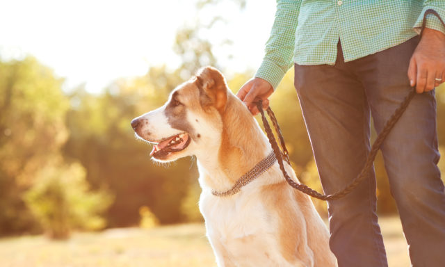 Прогулка с собакой на карантине