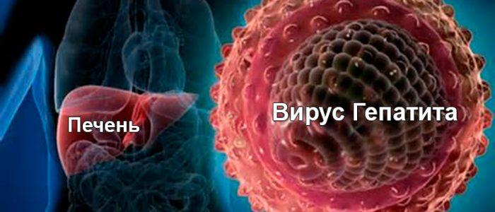 Сколько времени живет гепатит в вне организма?