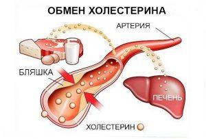Красный клевер при холестерине