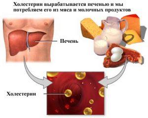 Печеночная клетка гепатоцит