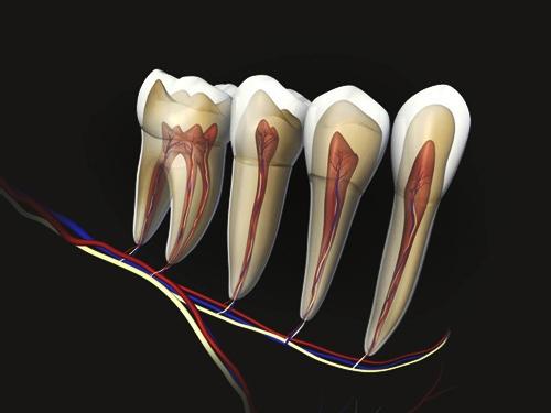 зубные нервы