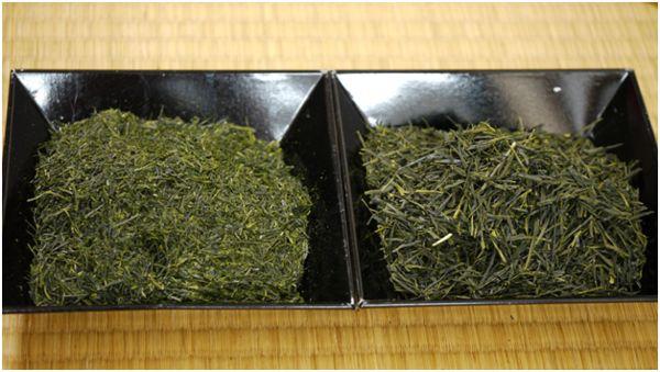 разные листья чая сенча