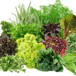 разнообразная зелень